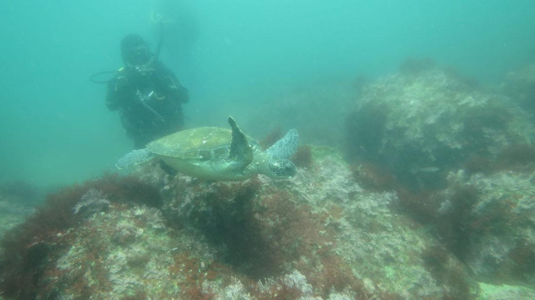 usami-diving