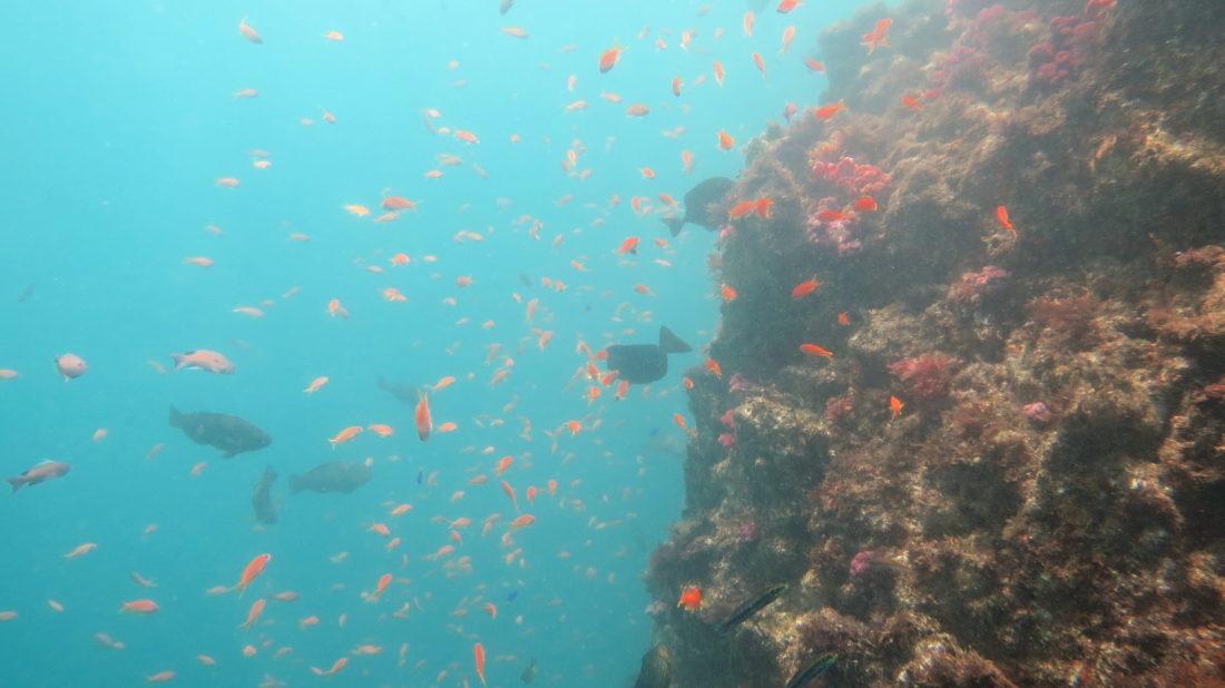 atagawa-diving