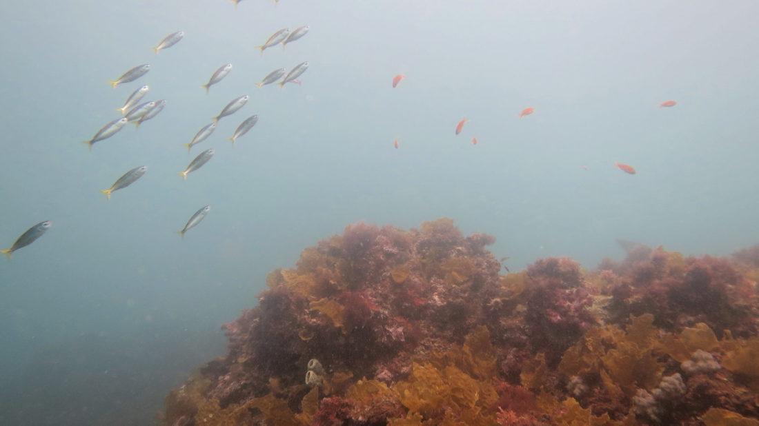 izu-diving