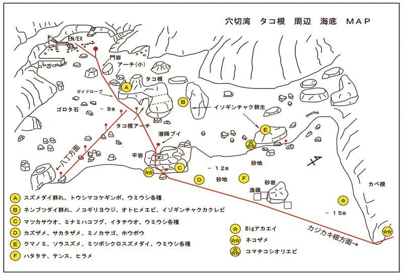 熱川ダイビングサービス&PONO Cafe 横浜ダイビングショップセブン