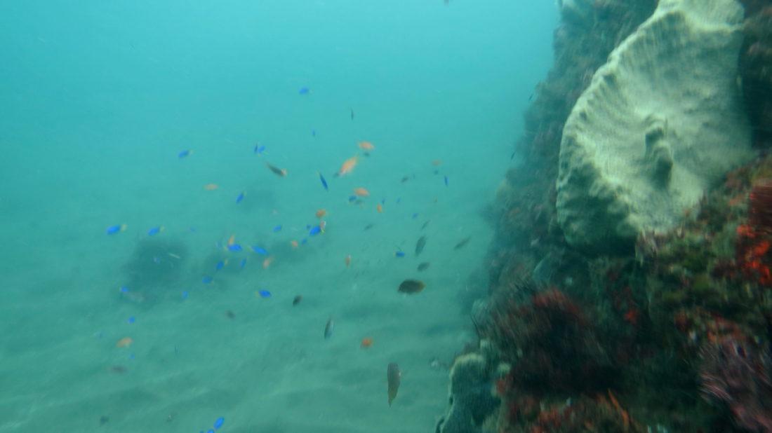 激しく荒れた熱川ダイビング